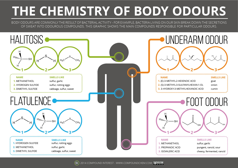 The Chemistry Of Body Odours Asynt