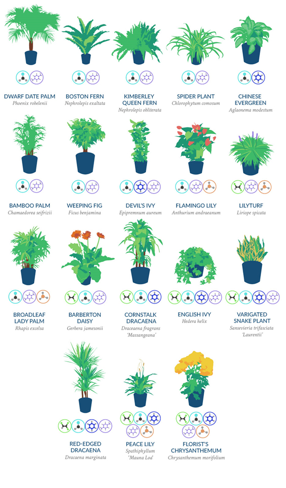 Better air according to nasa asynt for Best air filtering houseplants