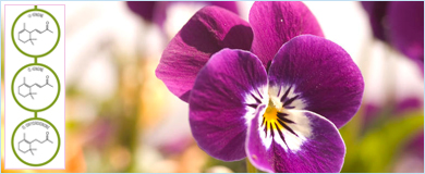 chemistry of flower scents Asynt chemistry blog March 2017