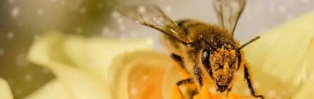 World Bee Day celebrated by Asynt with a Beebomb giveaway